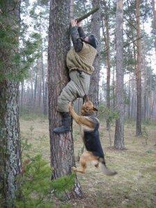 dog-chases-man-up-tree