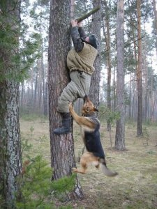 dog-chases-man-up-tree